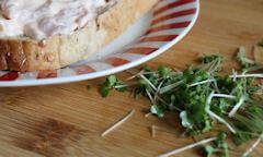 Tesco Prawn Cocktail Sandwich, cress